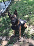 Photo of K9 Luke in his new vest