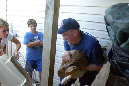 A rabbit is rescued by a firefighter